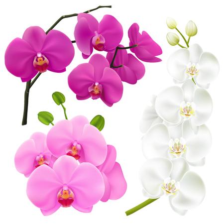 蘭は 3 リアルな画像設定ピンク マゼンタ紫と白のベクトル図に色とりどりの花と枝します。