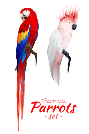 Realistic set of tropical parrots with red blue macaw and cockatoo with pink crest isolated vector illustration