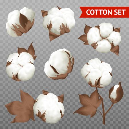 Mûre coton balle fibre dans ouvert graines cas réaliste ensemble plante parties isolé transparent fond vecteur Illustration