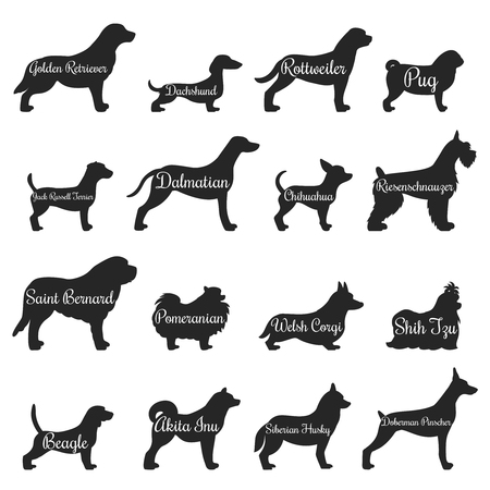 Isolated purebred dogs profile silhouette icon set with golden retriever pug beagle jack Russell terrier and other breeds vector illustration