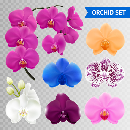 Colorful orchid flowers collection branch and blue pink wine mottled heads on transparent background realistic vector illustration