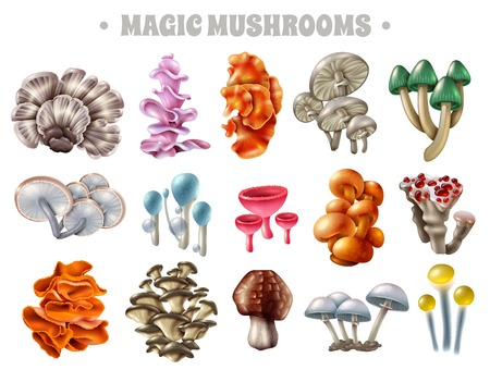 Set of magic mushrooms of various shape and color with bubbles and red droplets isolated vector illustration