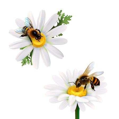 데이지 꽃에서 꿀을 수집하는 두 꿀 꿀벌 흰색 배경에 고립 된 벡터 일러스트 레이 션을 설정하는 현실적인 아이콘