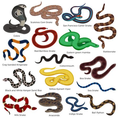 Los iconos decorativos coloreados serpiente venenosa fijaron con la descripción de los tipos de los reptiles aislados en la ilustración blanca del vector de la historieta del fondo Foto de archivo - 88363062