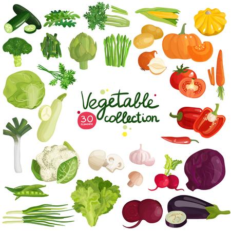 Groenten en kruiden collectie met aardappel, maïs, bieten, aubergines, broccoli, rucola, prei en sla Stock Illustratie