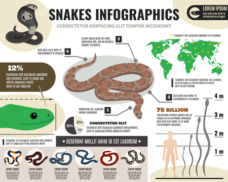 Snakes reptiles infographics with information about royal python and various serpents on light background vector illustration Çizim