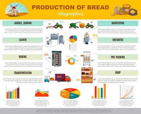 Bread production infographics with information and charts about cereal sowing, harvesting, baking, transportation to shop vector illustration Illustration