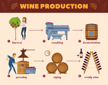 Winery production cartoon flowchart from grape harvesting to wine bottles rack infographic elements composition poster vector illustration Illustration
