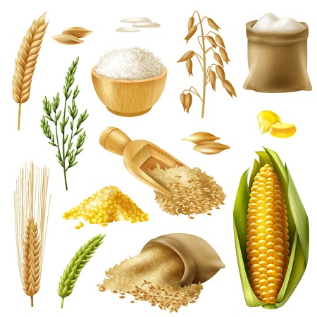 Colored and realistic cereals icon set with wheat rice barley oat corn vector illustration
