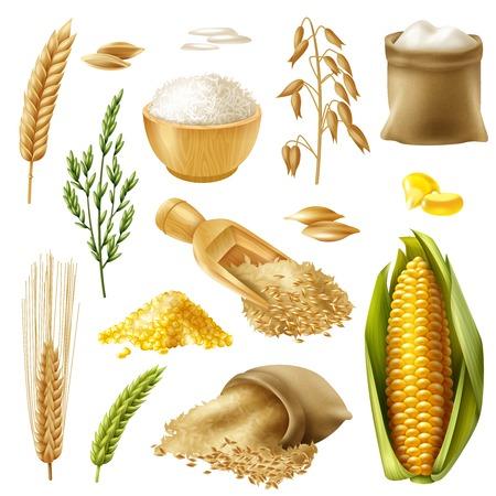 Zestaw ikon kolorowych i realistycznych zbóż z ilustracji wektorowych pszenica ryż jęczmień owies kukurydza kukurydza Ilustracje wektorowe
