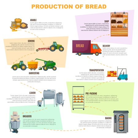 Bread production infographics, stages  from grain sowing to goods delivery in shop on light background vector illustration