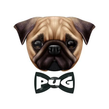 Farbige isolierte realistische Mops Hund . Portrait mit großem großem Kopf und der Fliege Vektor-Illustration Standard-Bild - 90263207