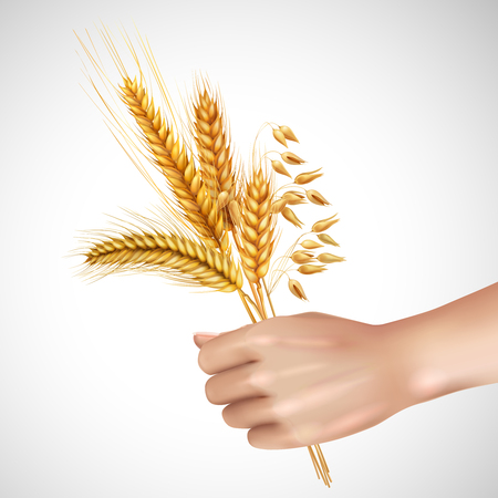 Spikelets of cereals including wheat, barley, oat in female hand realistic composition on white background vector illustration