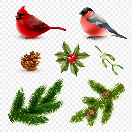 Set of winter birds red cardinal and bullfinch with fir branches isolated on transparent background vector illustration