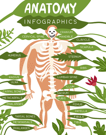 Skeleton anatomy infographics layout with human body image and detailed description of component parts of skeletal system flat vector illustration