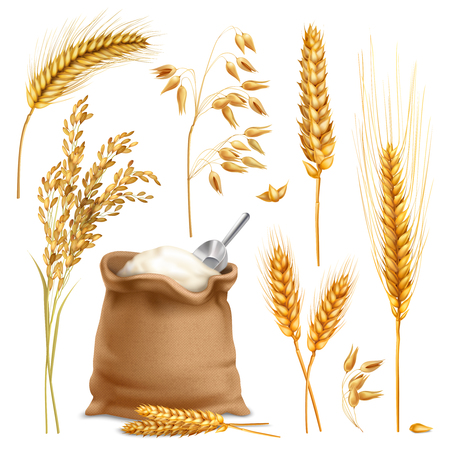 Set of realistic agricultural crops including rice, oats, wheat, barley, sack of flour isolated vector illustration Illustration