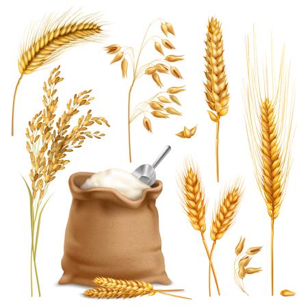 Zestaw realistycznych upraw rolnych, w tym ryżu, owsa, pszenicy, jęczmienia, worek mąki na białym tle ilustracji wektorowych Ilustracje wektorowe