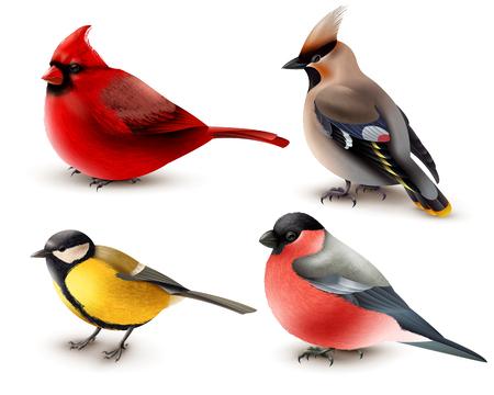Conjunto de aves de invierno con cardinal rojo, titmouse, waxwing y Camachuelo, diseño 3d aislado ilustración vectorial