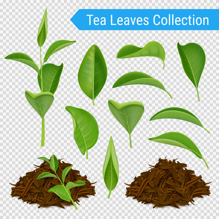 Set of realistic green leaves and heaps of dried tea foliage isolated on transparent background vector illustration