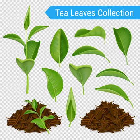 Set van realistische groene bladeren en hopen van gedroogde thee gebladerte geïsoleerd op transparante achtergrond vectorillustratie