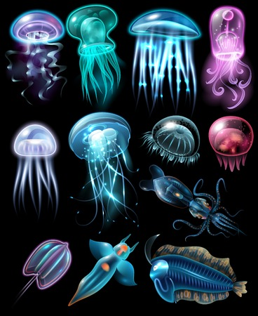 Light and multicolored stylish underwater animals icon set fish different jellyfish and squids vector illustration