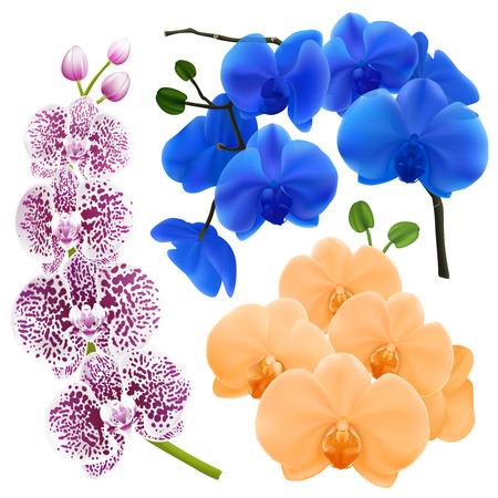 カラフルな花と蘭の枝は、アプリコットロイヤルブルーと紫のスポットベクトルイラストで設定された現実的な画像  イラスト・ベクター素材