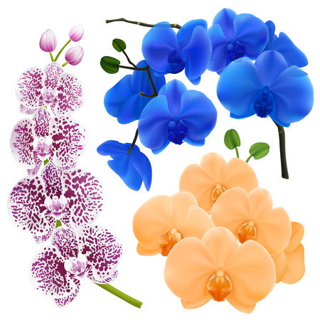 Orchid branches with colorful flowers realistic images set in apricot royal blue and purple spots vector illustration