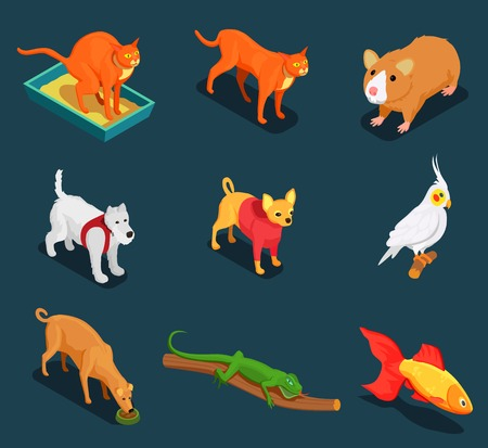 Pet shop colorful isometric icons set with guinea pig cat dog lizard on dark background vector illustration
