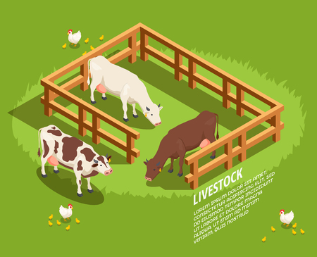 Livestock including cows in paddock, hens with chicks on pasture isometric composition on green background vector illustration Illustration