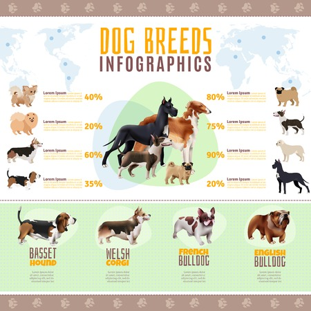 Colored dog breeds infographics with welsh corgi French and English bulldog breeds vector illustration