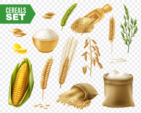Colored realistic and isolated cereals transparent icon set with steps of production vector illustration Stok Fotoğraf - 93058274