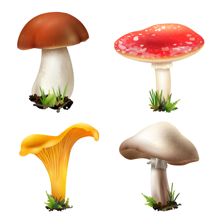 Realistic mushrooms set of four isolated images with ingrown boletus girolle champignon and fly agaric vector illustration Vettoriali