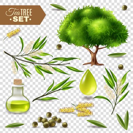 Botanique réaliste sertie de feuilles de théier et bouteille d'huile isolé sur illustration vectorielle fond transparent Vecteurs