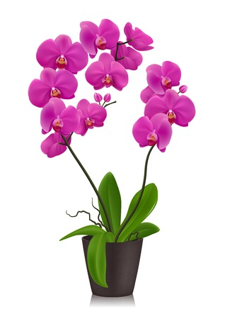 Purple orchid in flowerpot design concept  in realistic style on white background isolated vector illustration Illustration