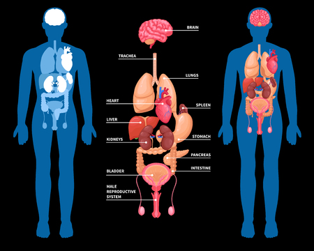 Human anatomy layout of internal organs in male body. Isolated on black background. Vector illustration.