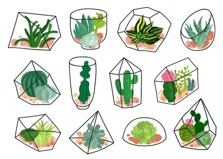 Succulents plants cacti decorative compositions in geometric transparent florariums containers. Flat icons set. Isolated vector illustration. Illustration