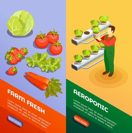 農家が新鮮な新鮮な果物や野菜のアイソメベクトルイラストを栽培する水耕栽培とエアロポニック垂直バナー  イラスト・ベクター素材