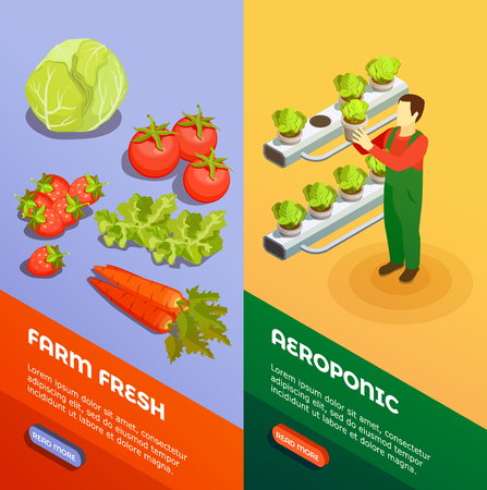 Hydroponic and aeroponic vertical  banners with farmer growing fresh fresh fruits and vegetables isometric vector illustration Ilustração