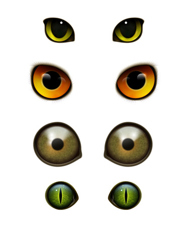 Monster bird animal owl cat realistic eyes set for handcraft projects embellishments applications decorations isolated vector illustration