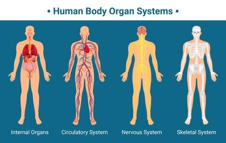 órganos internos órganos humanos nervioso nervioso y huesos anatomía del sistema y la ilustración vectorial de la carta del logotipo de la psicología plana