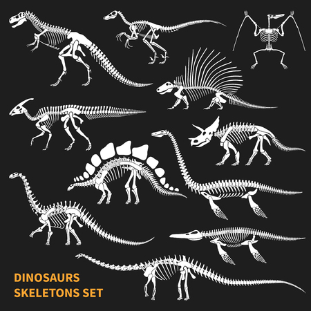 Dinosaurs skeletons isolated icons set on blackboard background in chalkboard style hand drawn vector illustration