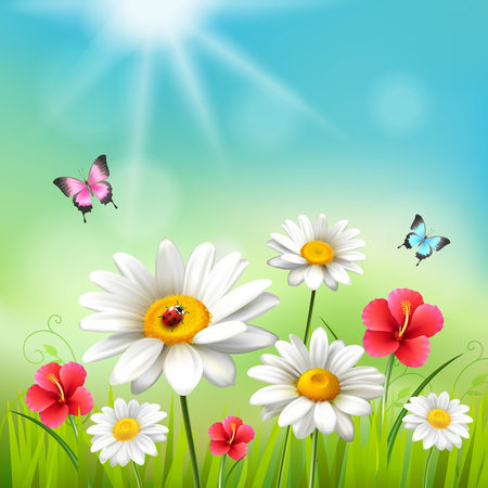 Daisy realistic 3d composition flowers in the sun with with butterflies vector illustration