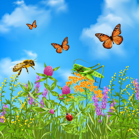 Insects in summer grass field realistic colorful composition with butterflies bumblebee grasshopper and ladybird vector illustration. Illustration