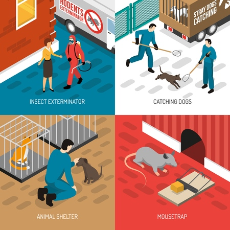 Le icone isometriche di controllo degli animali 4 quadrano il concetto con l'illustrazione di vettore di sterminio di cattura e degli insetti del cane randagio Archivio Fotografico - 96313626