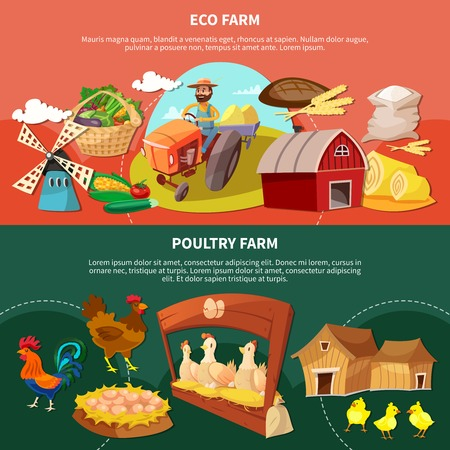 Two farm colored cartoon banner set with eco and poultry farm descriptions vector illustration Çizim