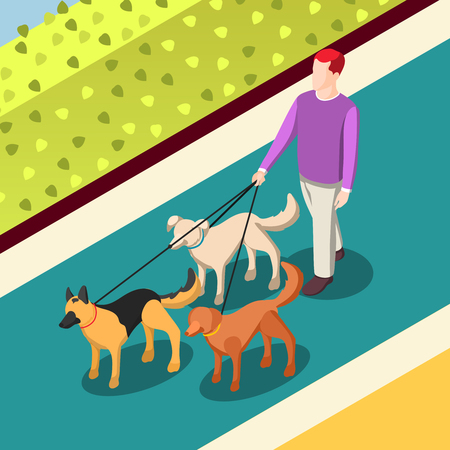 Employed worker during dogs walking on leashes on walkway with green bushes isometric background vector illustration