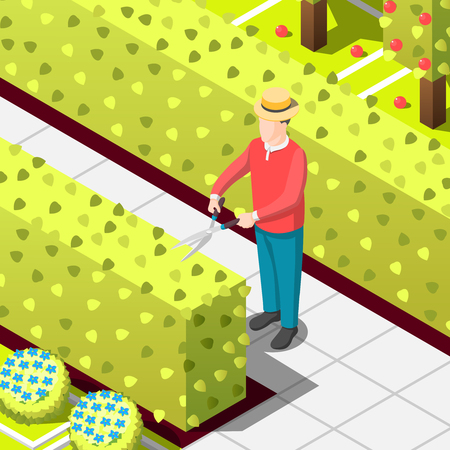 Gardener, employed worker with secateur during trimming of hedges. Isometric background with bushes and trees vector illustration.