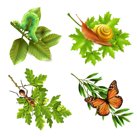 Insects on plants concept 4 realistic icons set with caterpillar snail butterfly and ant isolated vector illustration