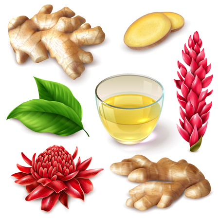 Realistic ginger root with red flowers  spicy set with tea, leaves on white background isolated vector illustration