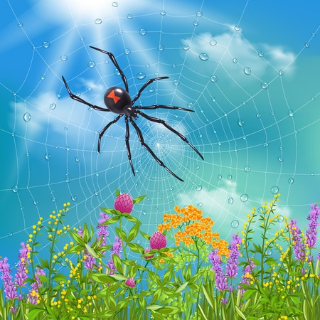 Spider in web sunbathing above wild flowers on sunny summer day close up realistic image vector illustration